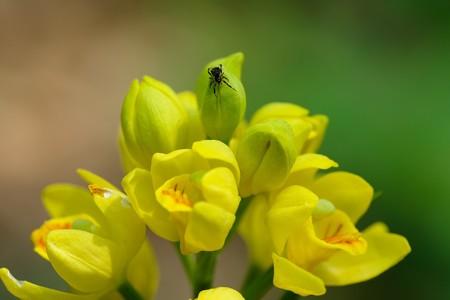 2020.04.30 瀬谷市民の森 金蘭に小さなクモ