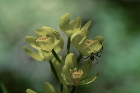 2020.05.02 瀬谷市民の森 深い森に金色の蘭が咲く