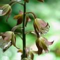 Photos: 2020.05.05 瀬谷市民の森 海老根の花にヨコバイの仲間の抜け殻
