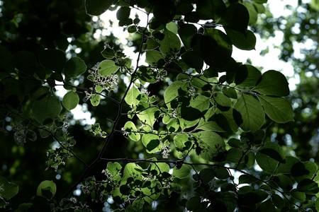 2020.05.05 瀬谷市民の森 木漏れ日
