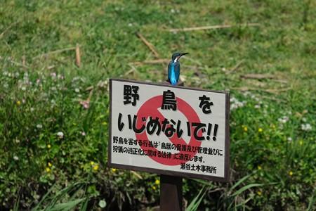 2020.05.17 和泉川 「野鳥をいじめないで!」