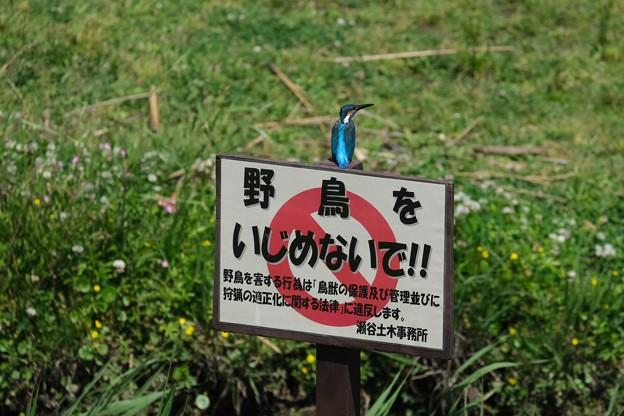 Photos: 2020.05.17 和泉川 「野鳥をいじめないで!」