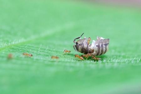 2020.05.25 瀬谷市民の森 団子虫とアリ