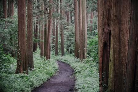 2020.07.25 追分市民の森 森道