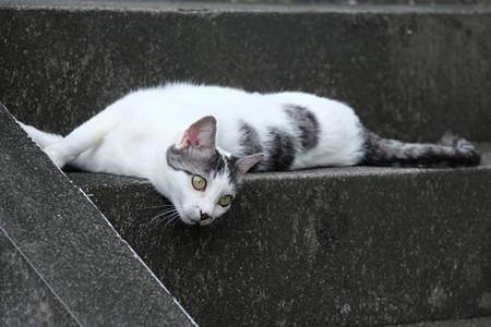 2020.09.16 和泉川 アパートの階段 ネコ