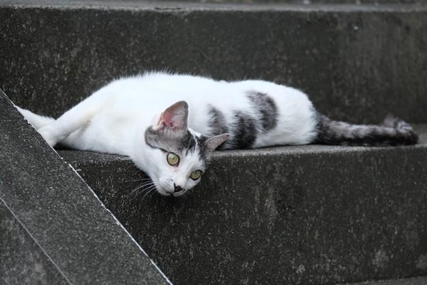 Photos: 2020.09.16 和泉川 アパートの階段 ネコ