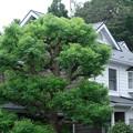 Photos: 2020.09.17 追分市民の森 アパートメント