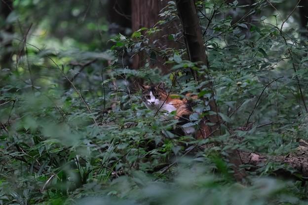 2020.09.21 瀬谷市民の森 森ネコ