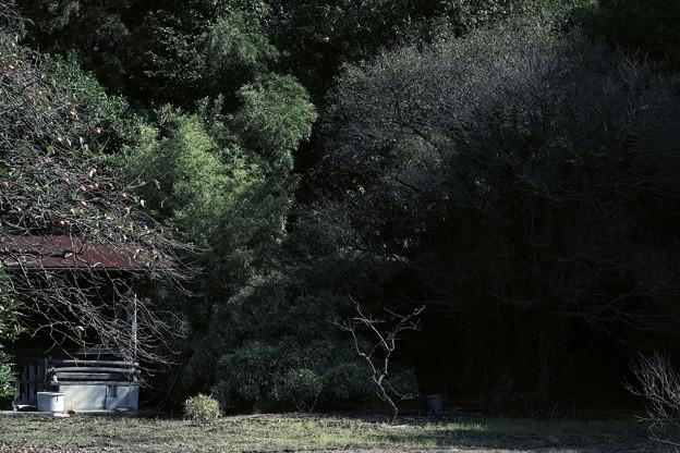 2020.10.24 和泉川 日陰の梅手前に柿