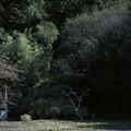 Photos: 2020.10.24 和泉川 日陰の梅手前に柿