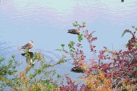 2020.10.27 和泉川 色づく水辺