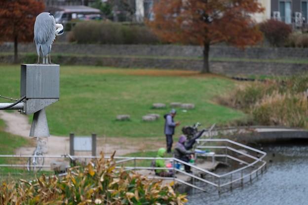 Photos: 2020.11.24 和泉川 釣り人とアオサギ