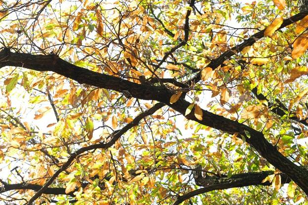 Photos: 2020.11.26 追分市民の森 コツコツと音がする木
