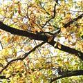 2020.11.26 追分市民の森 コツコツと音がする木