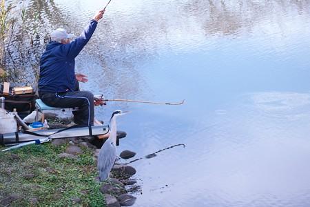 2020.12.13 和泉川 釣り人とアオサギ