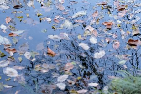 2020.12.20 和泉川 枯れ木に枯葉