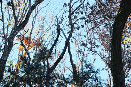 2020.12.23 瀬谷市民の森 枯れ木で朝の調べ