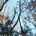 Photos: 2020.12.23 瀬谷市民の森 枯れ木で朝の調べ