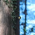 Photos: 2021.01.02 追分市民の森 メジロ