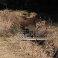 Photos: 2021.01.09 和泉川 干上がる