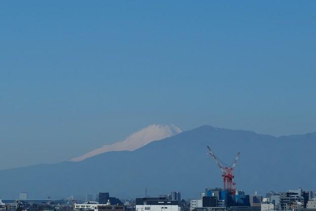 Photos: 2021.02.06 瀬谷市民の森 霞む富士