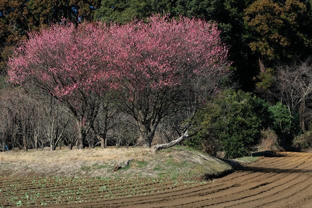 2021.02.09 追分市民の森 キャベツ畑