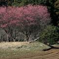 Photos: 2021.02.09 追分市民の森 キャベツ畑