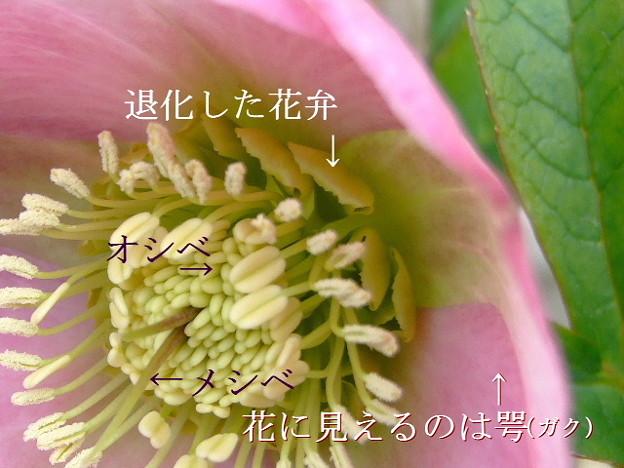 写真: クリローの花は・・・