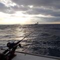 写真: 洲の崎沖合