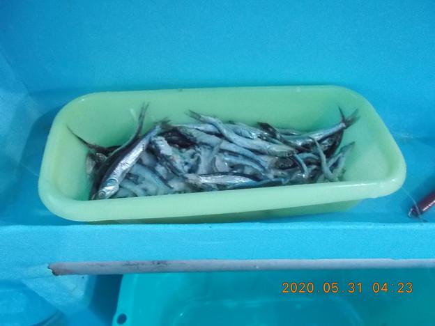 根魚五目釣りの餌