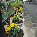 冬の花に植え替え