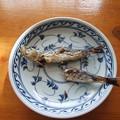 Photos: ヒラメに喰われなかったイワシは・・・