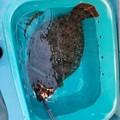 Photos: ヒラメ釣りに