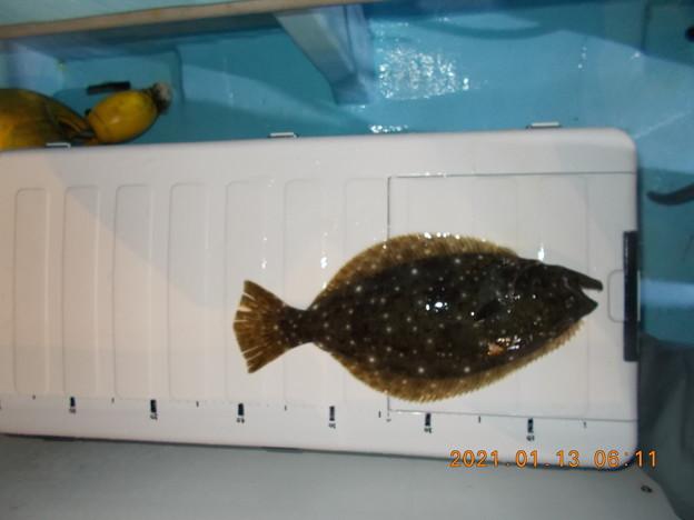 釣り開始早々小ソゲをゲット