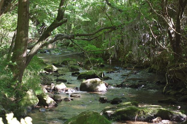 Photos: 裏の川
