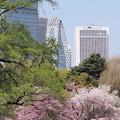Photos: 都会の春