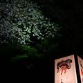 大津絵のあんどん と 葉桜