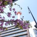 写真: 京都タワー ~八重桜越し~