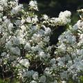 Photos: 何と言う花でしょうか 2/3