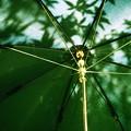 写真: 「第133回モノコン」 影生む傘