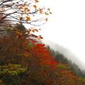 Photos: 小雨のなか撮影