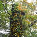 Photos: 黄葉をまとう