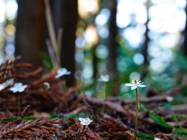 登山道脇の白い花に癒される ~熊野古道 中辺路~