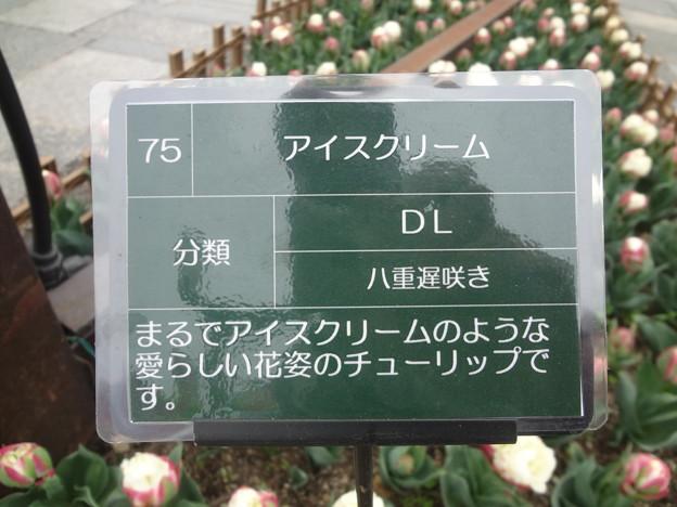 Photos: DSC09051
