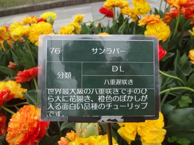 Photos: DSC09053
