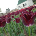 Photos: DSC09061