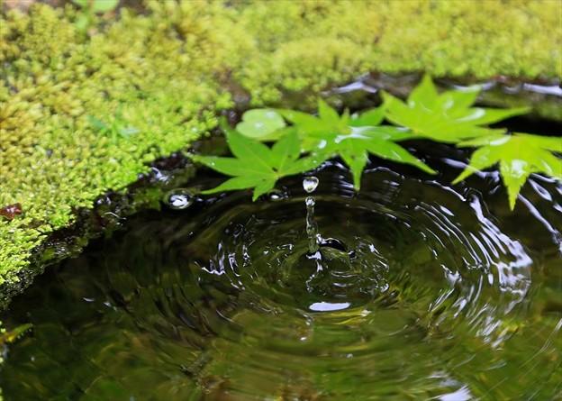 楊谷寺の手水鉢