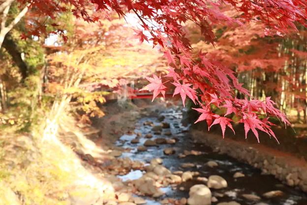 赤橋と紅葉