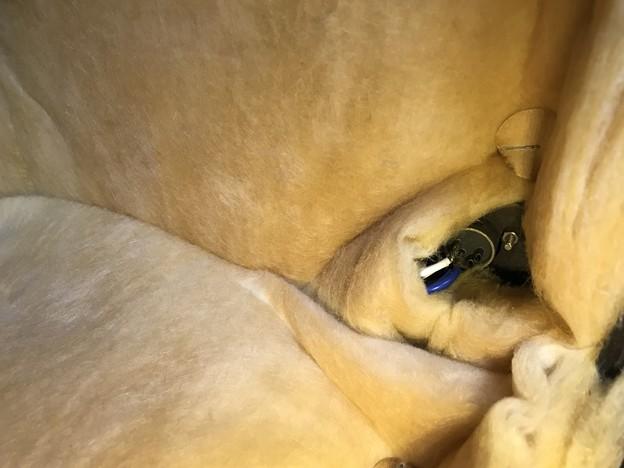 写真: ダイヤトーン R305のウーファー スポンジ交換 4