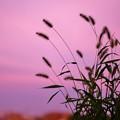 写真: 夕景1